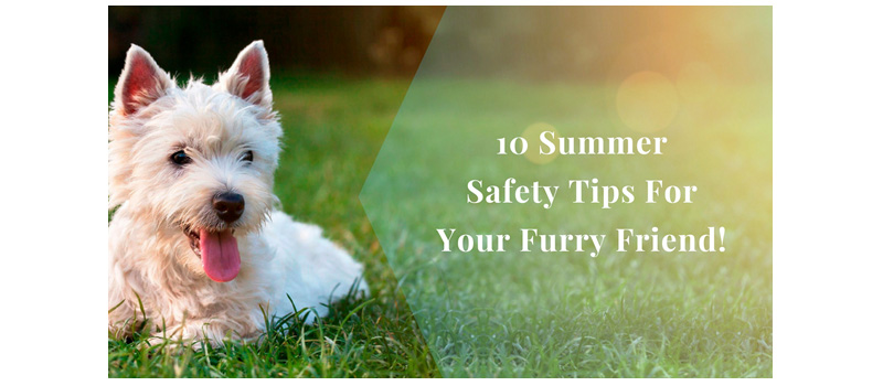 10 Safety Tips To Keep Dogs Healthy and Fit During Summer
